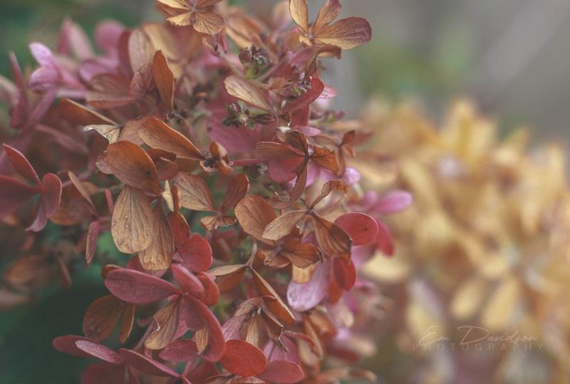 AutumnVibes2020EmDPost-1