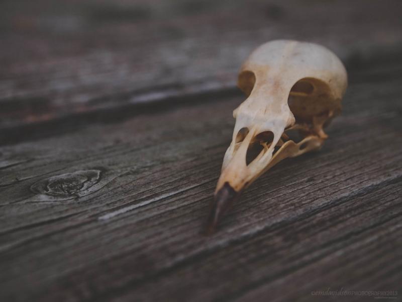BirdSkull.10.08.2013-2PS1