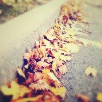 Curb Leaves